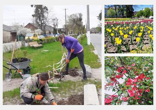 Комунальники Славути висадили майже 1000 дерев та кущів