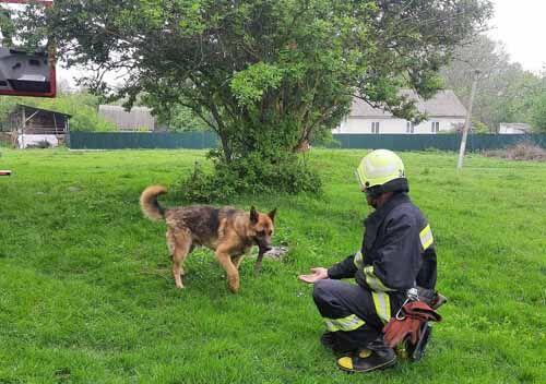 На Білогірщині пес потрапив у каналізаційний колодязь