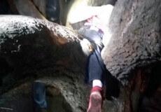 У Шепетівці 5-річна дівчинка застрягла між стовбурами дерева: довелося викликати рятувальників