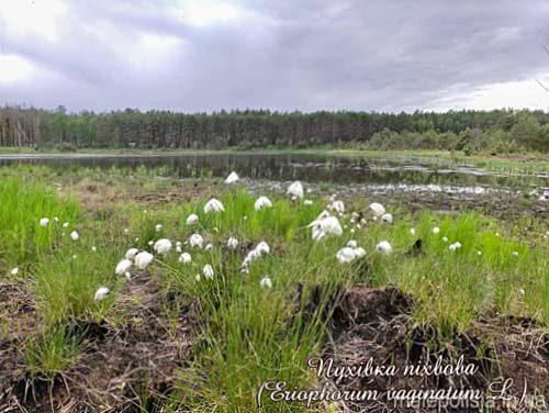 На Ізяславщині науковці Польщі та України провели ботанічні дослідження
