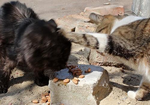У Шепетівці розгорівся скандал між пенсіонером та зоозахисницею, яка годувала безпритульних тварин