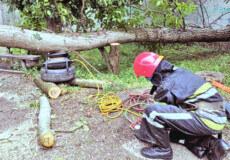 Негода на Хмельниччині: повалені дерева та пошкоджені авто