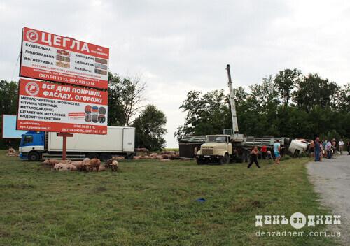 ДТП зі свиньми у Шепетівці: частина залишилася у вантажівці, інші забрели на автозаправку, майже десяток — загинуло