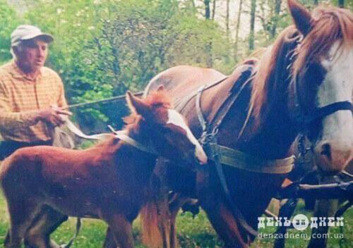 На Шепетівщині з пасовища зникло 4 коней