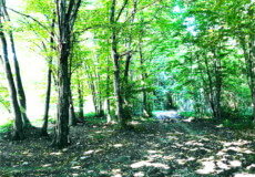 На Полонщині чоловік повідомив екоінспекцію про порушення «сезону тиші» лісівниками