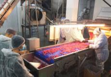 У Шепетівці перевірили підприємство, яке постачає ягоди до країн ЄС
