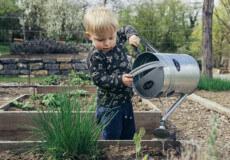 На замітку юної господині: як засіяти город і отримати хороший урожай?