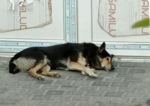 У Нетішині вуличний пес серед білого дня пошматував ногу дитині