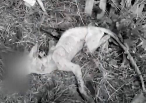 У сусідній з Хмельниччиною області до капкану мисливців потрапила «чупакабра»