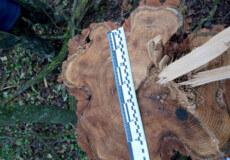 На Хмельниччині чоловік рубав дерева на території національного природного парку «Подільські Товтри»