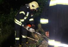 Вночі у Шепетівському районі на автодорогу впало дерево