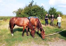 На Шепетівщині зниклих коней знайшли за десятки кілометрів від пасовища