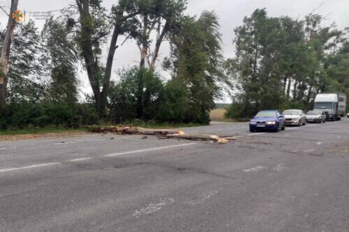 Повалене вітром дерево перекрило рух на трасі поблизу Нетішина