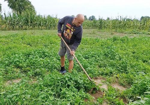 У Шепетівському районі колишній охоронець займається вирощуванням кавунів