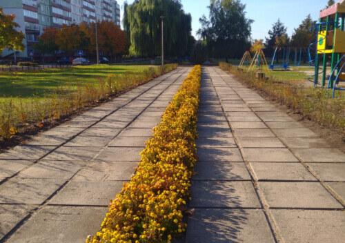 У Нетішині висадили по тисячі кущів троянд та спиреї вангутти