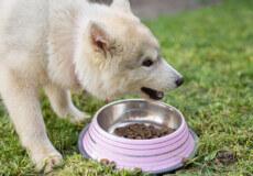 Раціон домашнього улюбленця: як обрати корм для собак