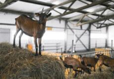 Державна підтримка фермерів: фінансування молодих і перспективних